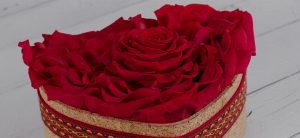 Preserved roses for Valentine's Day
