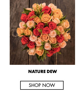 Nature dew - Rose colors and their meaning