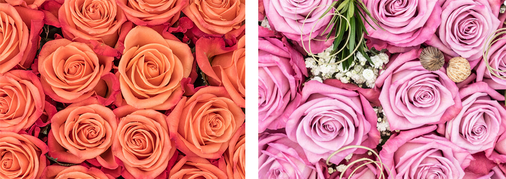 Orange & lavender roses - Rose colors and their meaning