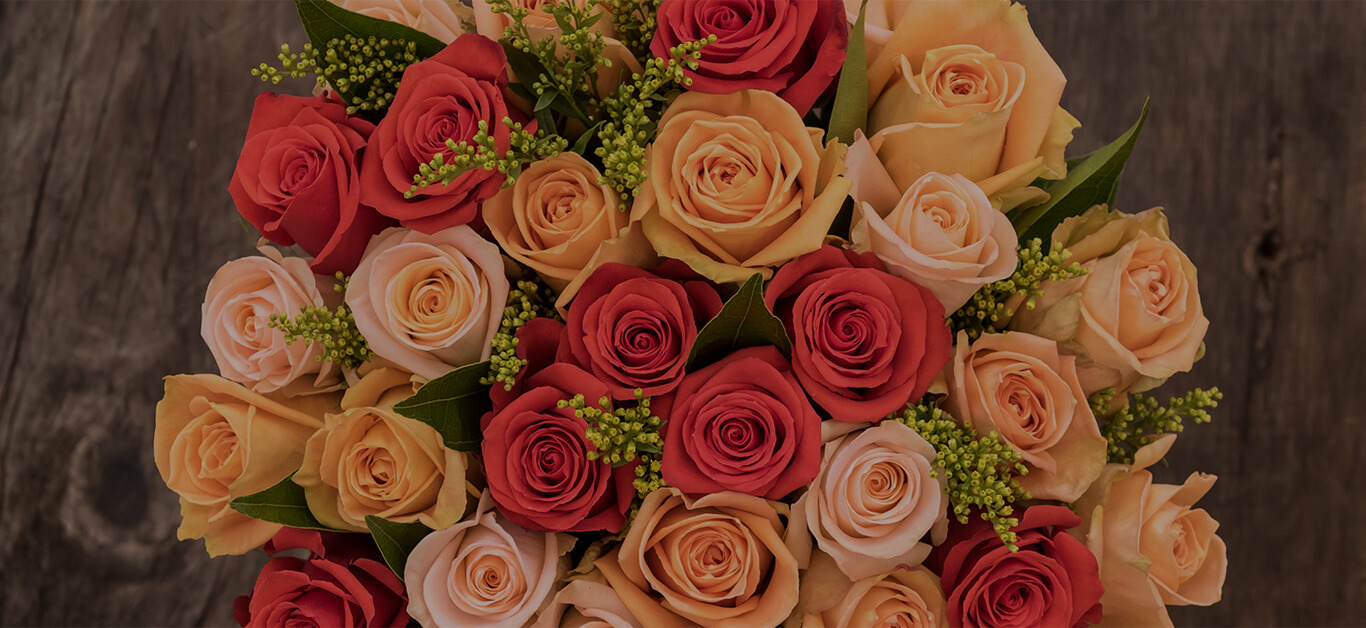 Rose colors and their meaning - Sense Ecuador