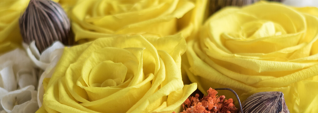 Rose colors and their meaning sense ecuador yellow roses rose colors and their meaning mightylinksfo