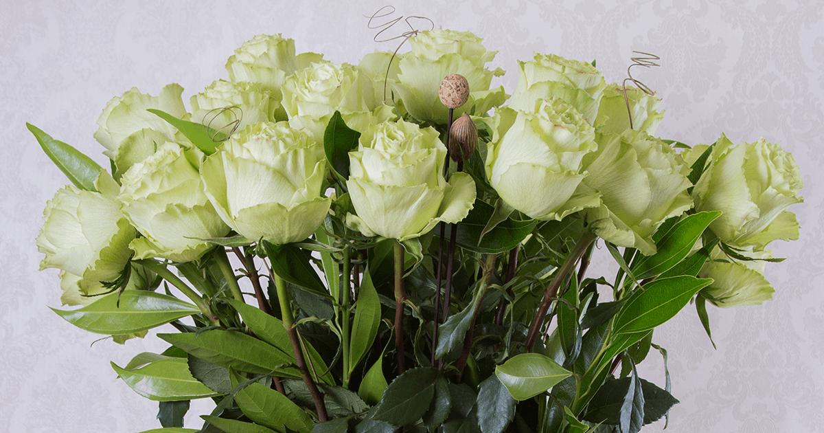 The Real Meaning Behind Green Roses Sense Ecuador