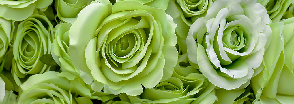 Where do green roses come from