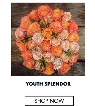Youth Splendor