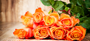 Rose colors meaning: Orange roses