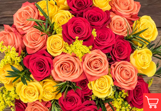 Vermillion orange roses meaning and occasions