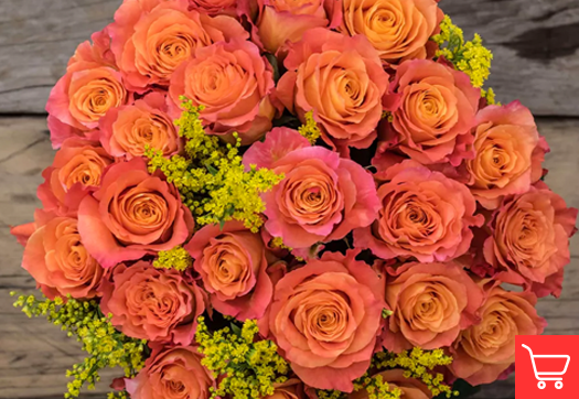 Tangerine orange roses meaning and occasions