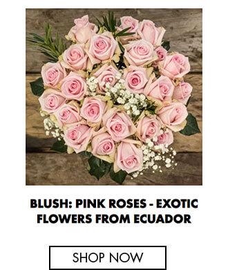 Blush: Pink roses