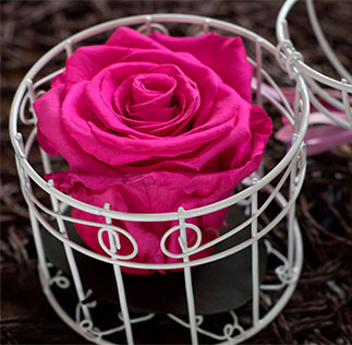 Preserved Natural Roses