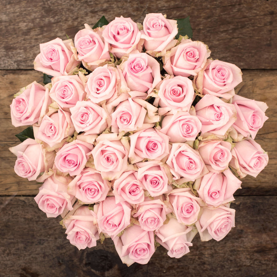 Blush Pink Roses Exotic Flowers From Ecuador