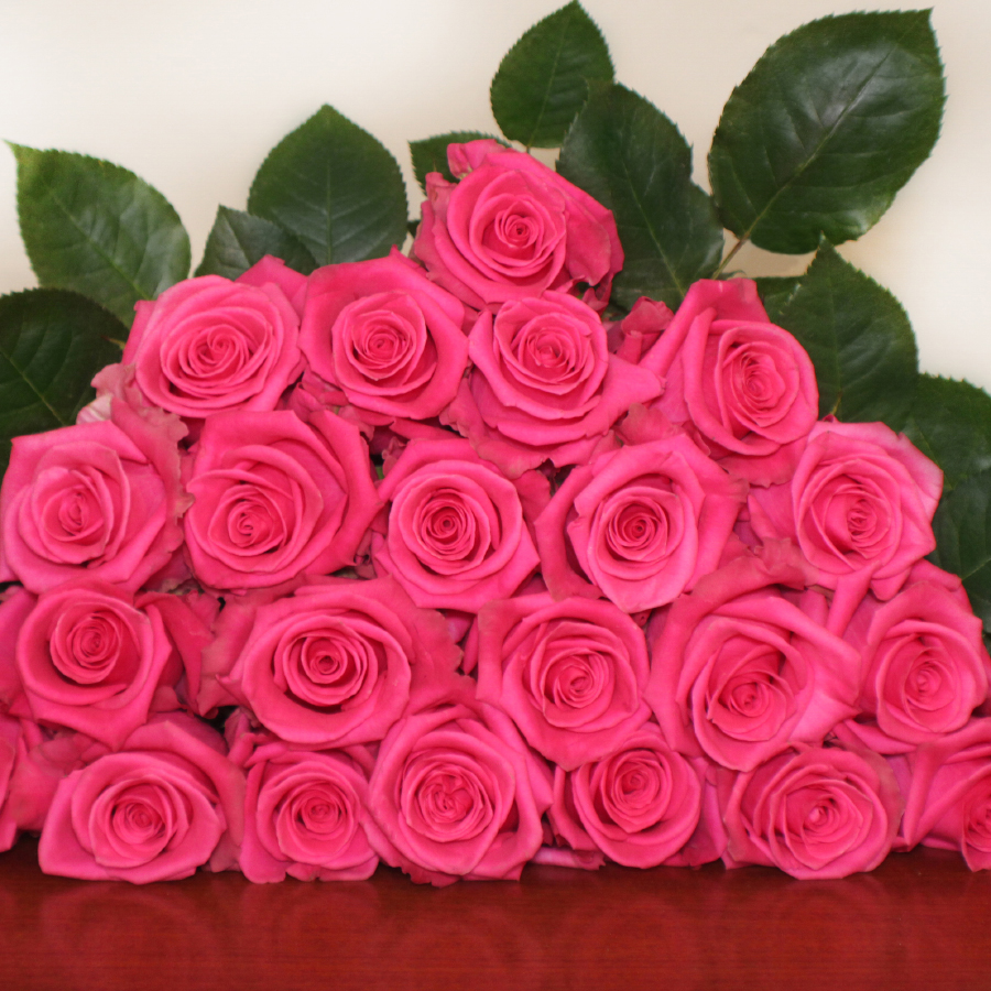 Cotton Candy Roses - Bulk Order- 40-50CM