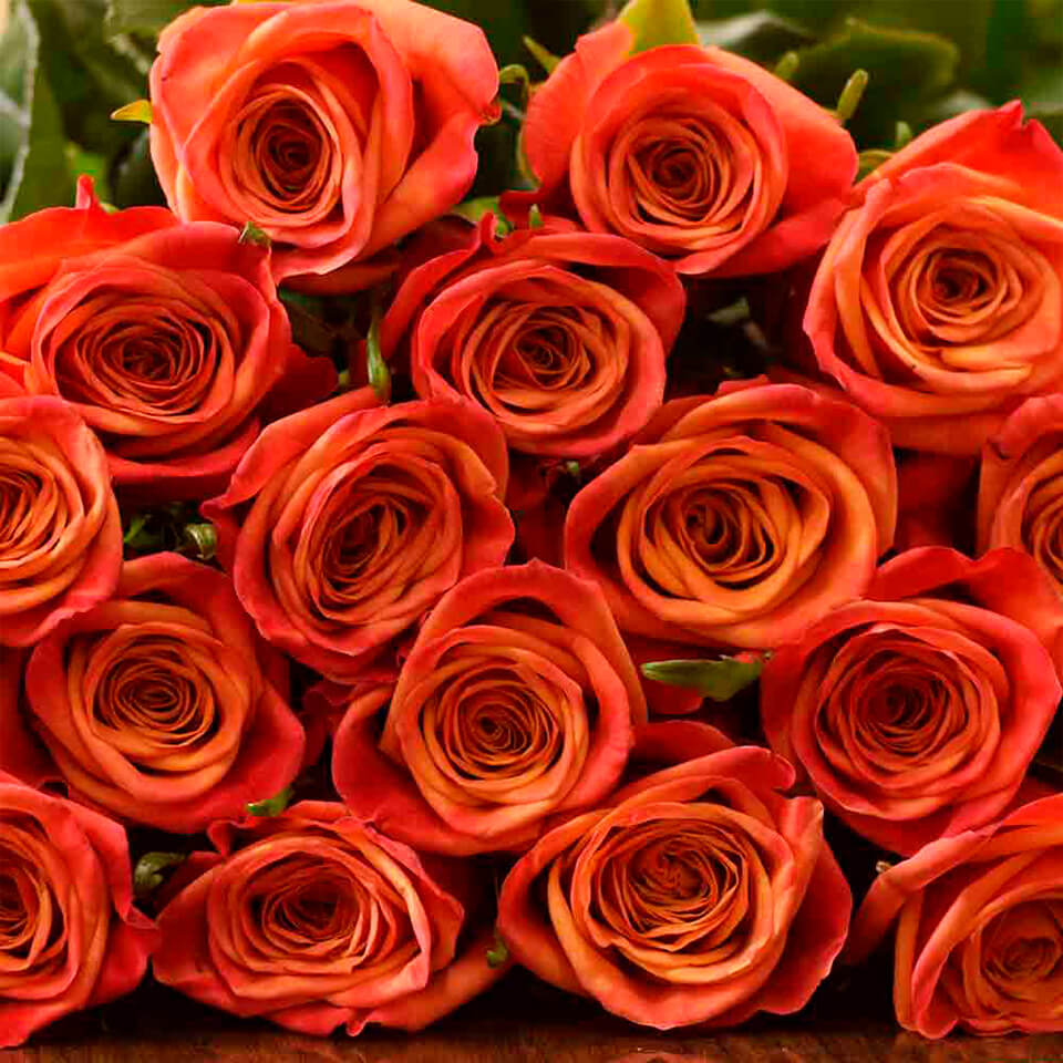 Picanto Roses