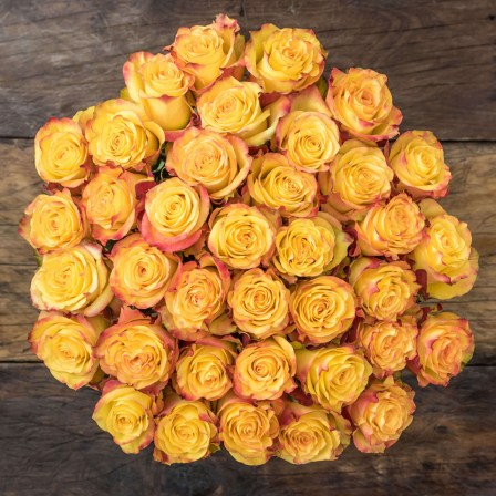 long stem roses from ecuador