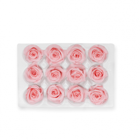 01_light_pink_mini_roses