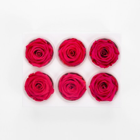 preserved roses from ecuador